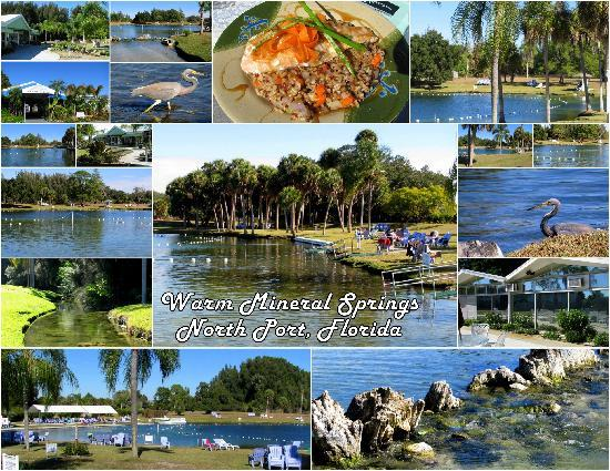 A collage of my photos taken at Warm Mineral Springs!