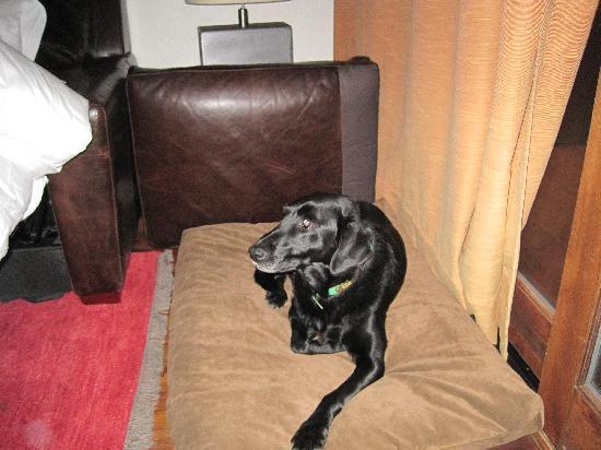 Fireside Resort: Cozy Dog Bed