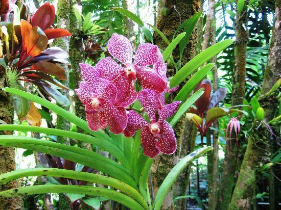 Orchids at garden foto di hawaii tropical botanical for Lucernari di hawaii llc