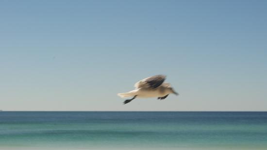 Seascape Inn: The Birds