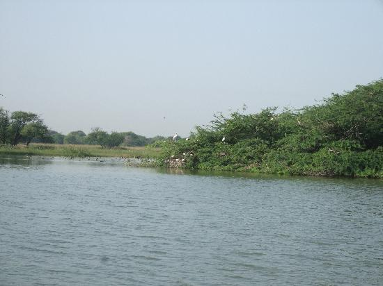 Sultanpur National Park Bird Sanctuary: Painted Stroke Nest