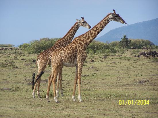 Garoda Resort: Giraffe