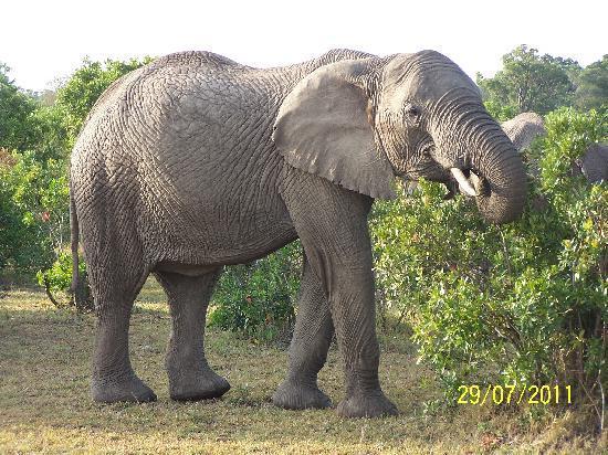 Garoda Resort: Elefante