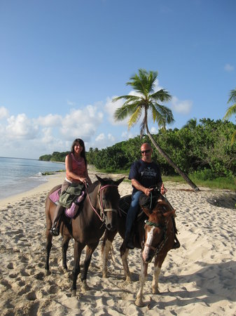 Paul and Jill's Equestrian Stables Photo