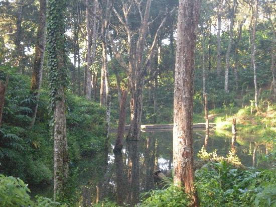 Greenspaces B&B Munnar: nearby pond