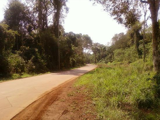 La Aldea de la Selva Lodge: camino al hotel