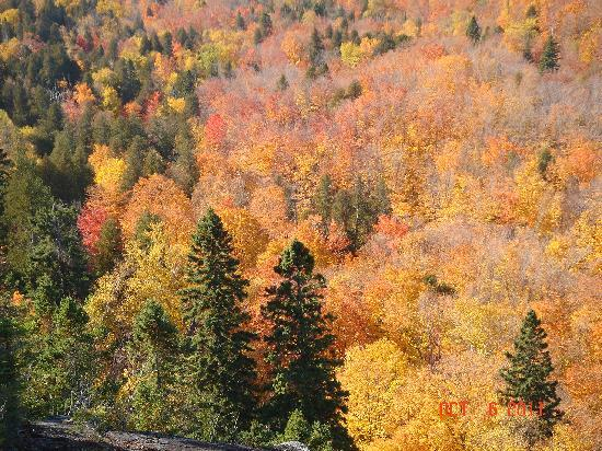 Lutsen Mountain Tram: Fall Colors