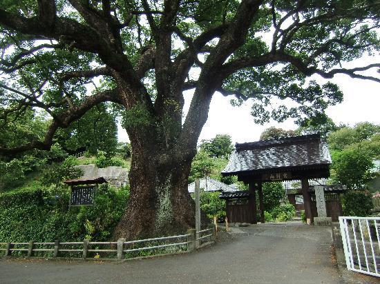 Izu, Ιαπωνία: 樹齢1000年の大楠