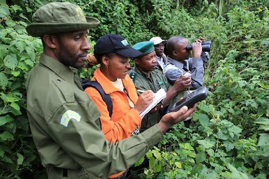 Bukavu, République démocratique du Congo : Monitoring gorillas