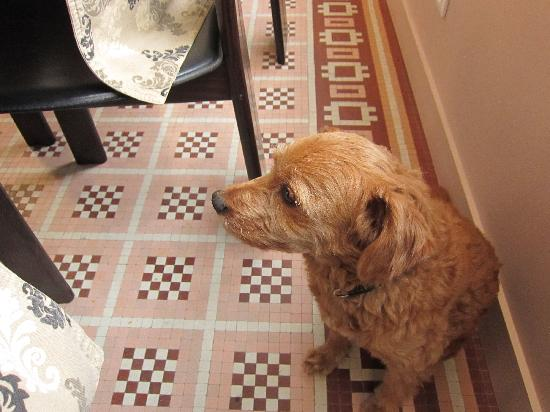 La Halte Montaigne: Well-behaved pet who waits patiently for scraps