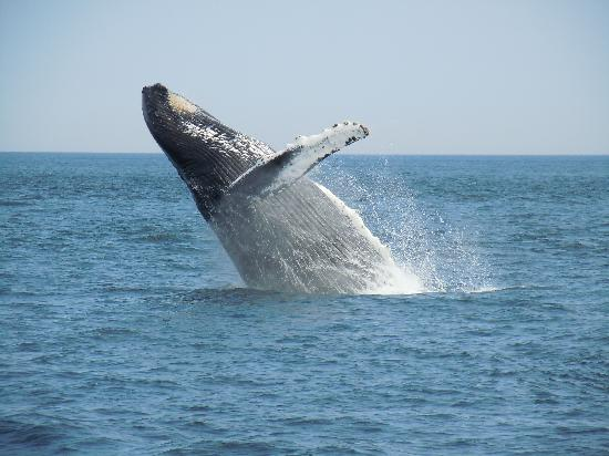 Dolphin Fleet Whale Watch : I took this photo on my trip........
