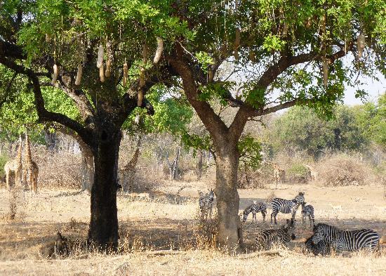 Flatdogs Camp: whilst on a walking safari