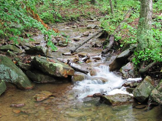 Mountain Creek Cabins : the creek behind the cabin