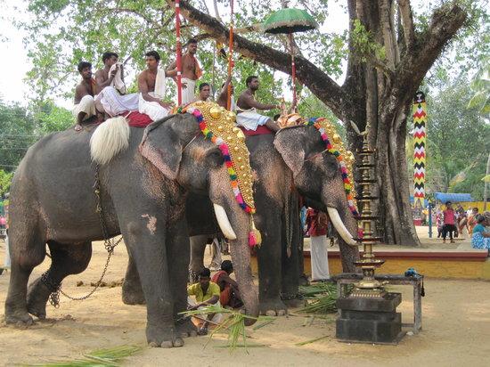 Muziris Heritage - Day Tours: temple festival