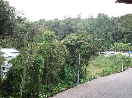 โรงแรมเดอ ลา เฟิร์นส: View outside our room