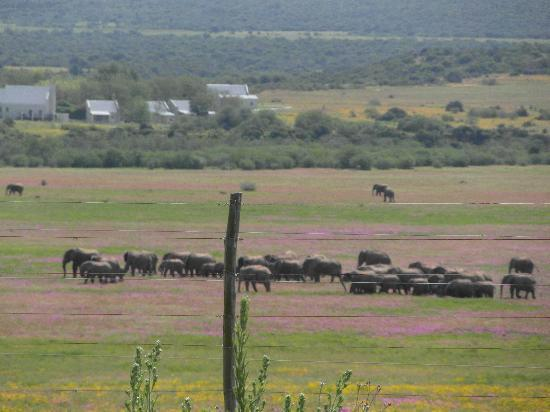 The Beach Hotel: addo elephant reserve