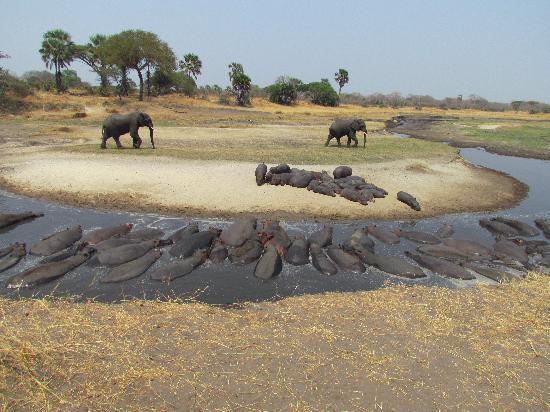 Katavi Wildlife Camp: intorno a noi