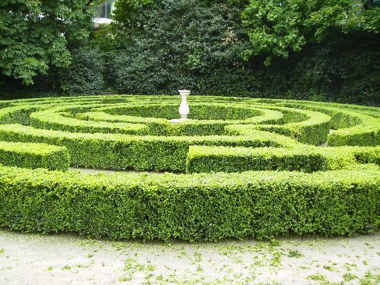 Iveagh Gardens: The maze