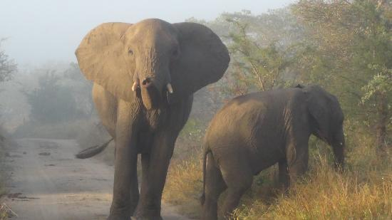 Vuyatela Lodge & Galago Camp: Elephant Encounter