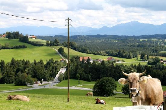Pure Bavaria Tours: View from our picnic lunch on the Milk Trail