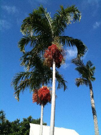 Sunset Beach Inn: Fall colors...Florida Style