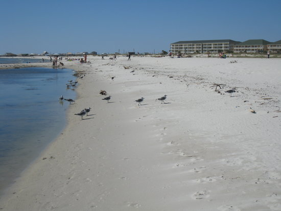 Dauphin Island Public Beach The