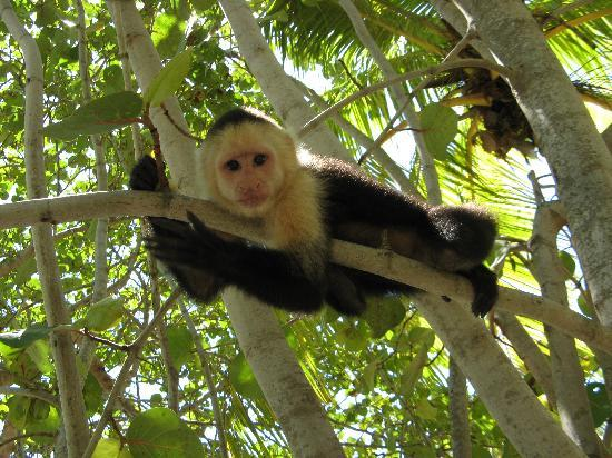Fantasy Island Beach Resort: monkey