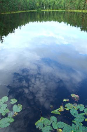 Natura Viva: Nuuksio Forest Lake Trail : Nuuksio Forest Lake
