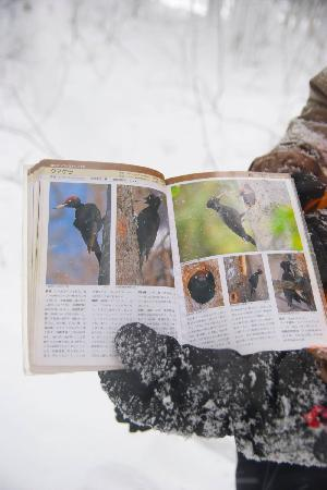Niseko natureguide Forestrek - Day Tours: ネイチャーガイドとして色々教えていただけます