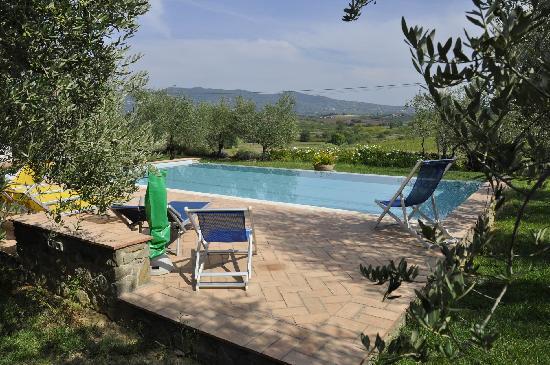 Agriturismo Spazzavento: La piscine au milieu des oliviers