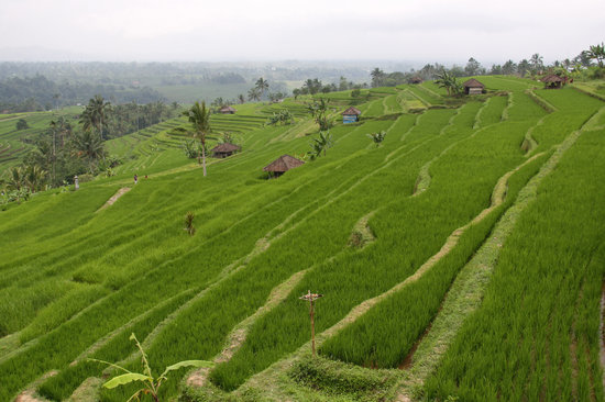 Jatiluwih Green Land: Beautiful in all directions