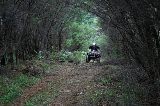 NZ Quadbike Adventures: A Bush track is included in our ride