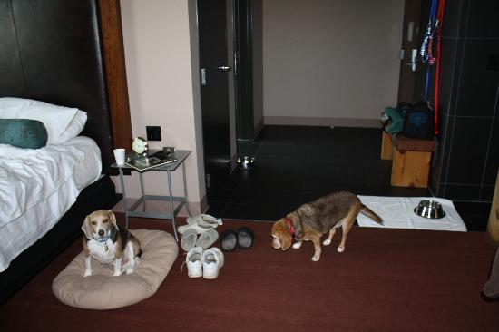 โรงแรม ดิ ไอรอน ฮอร์ส: Roomy