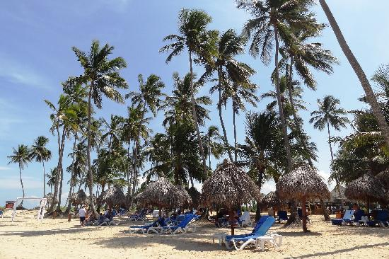 Dreams Punta Cana Resort & Spa: The Beach