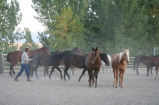 The Hideout Lodge & Guest Ranch: Top Notch Horses at Hideout