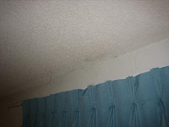 Red Roof Inn Binghamton North: Cobwebs everywhere
