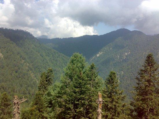 Dunga Gali Pine Line Track
