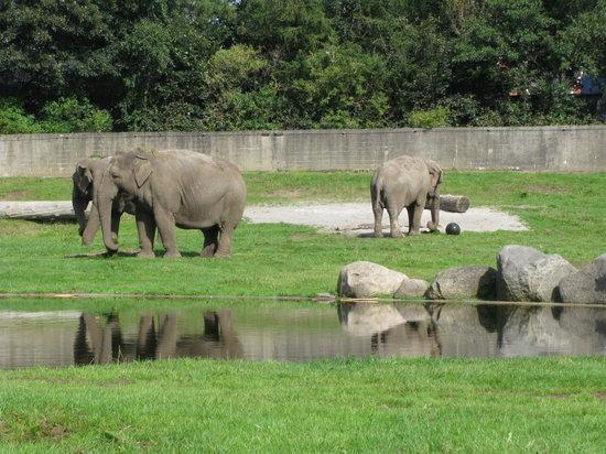 Givskud Zoo - Elefanten