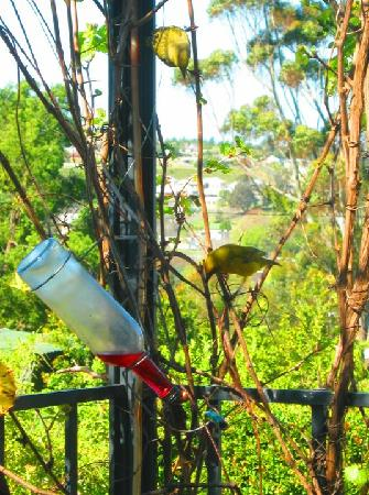 Impangele B and B & Self Catering Cottage: Bird watching in the garden at breakfast