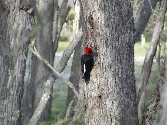 Río Hermoso Hotel de Montaña: aves del parque