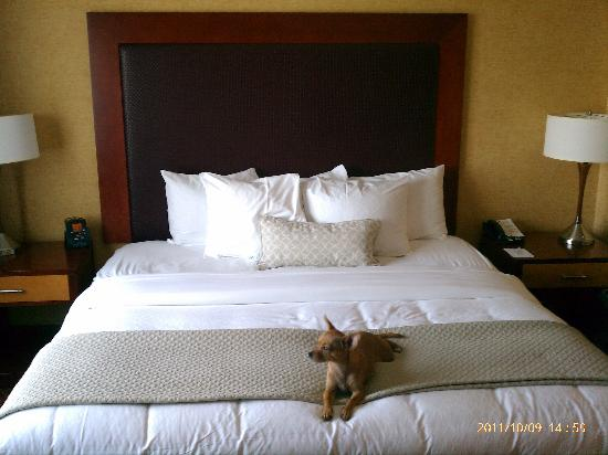 Embassy Suites by Hilton Charlotte - Concord / Golf  Resort & Spa: King Bed