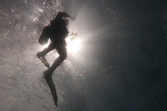 Baracuda Diving