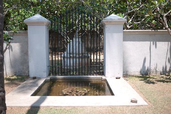 Casa Siena: garden detail