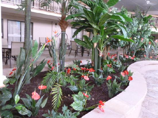 Garden Plaza Hotel: Real and Faux Plants
