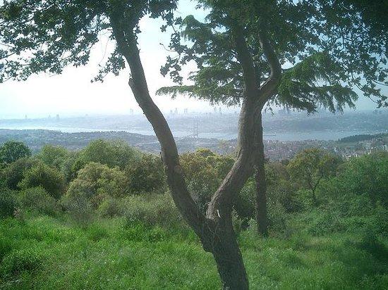 チャムルジャの丘