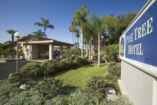 Chino, CA: Best Western Pine Tree