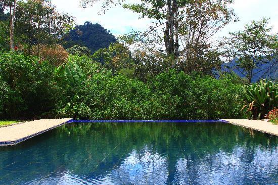 El Abrazo del Arbol: Pool