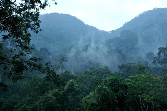 The Buhoma Community Rest Camp: If there is mist, there will be gorillas...