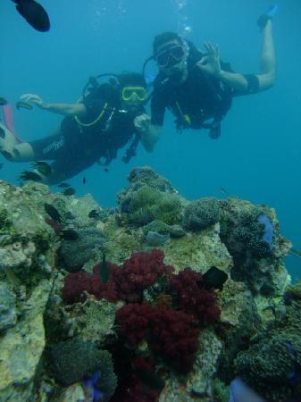 ชาร์คกี้ สคูบา: Buceo Phuket1