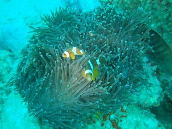 Sharkey Scuba: Buceo Phuket2